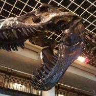 5 Great Reasons to Visit a Natural History Museum